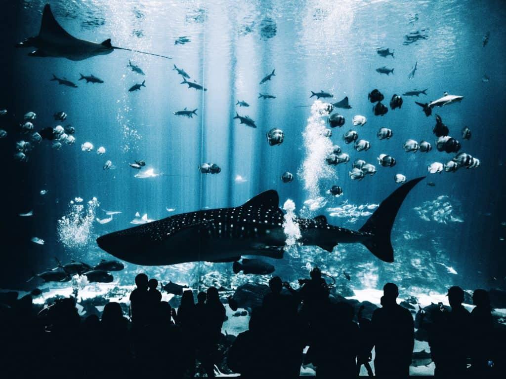 Picture of shark at the Georgia Aquarium in Atlanta Georgia