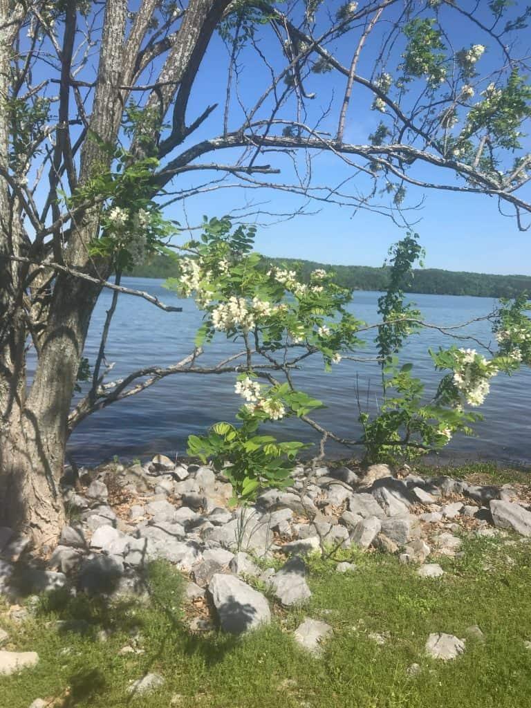 Lake Guntersville image of the lake