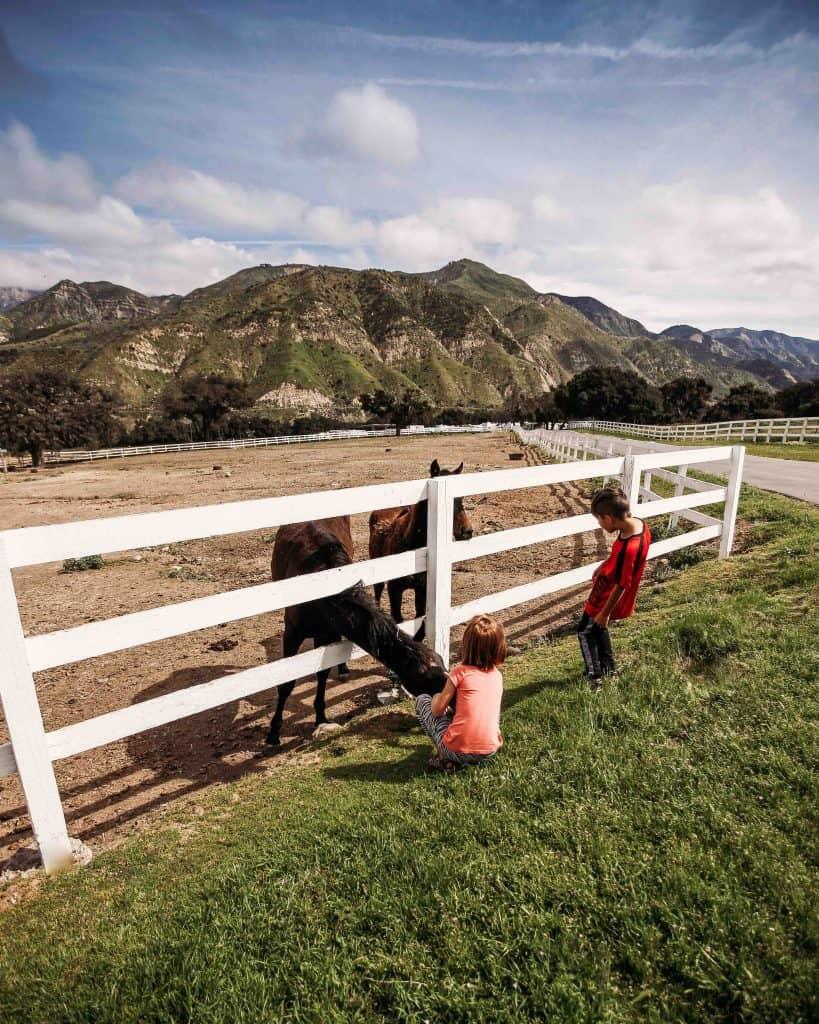 Kids petting horses